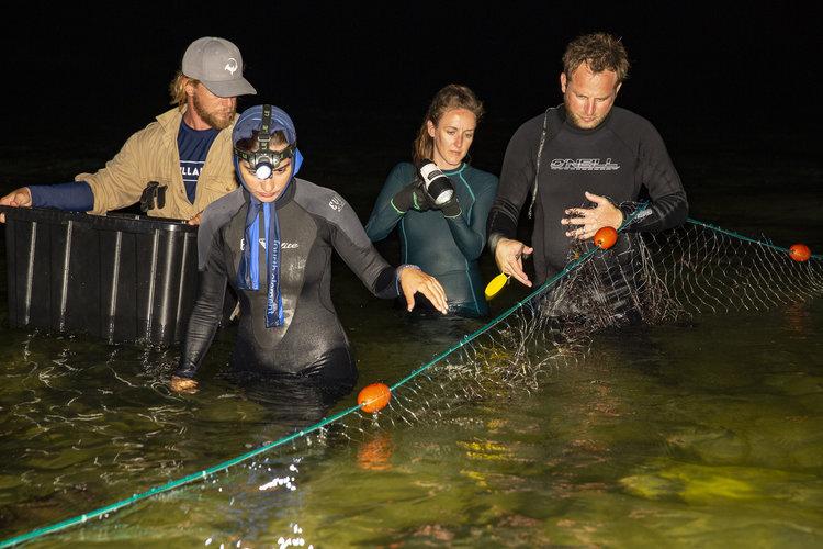 Silent Hunter - Annie Dr Tristan Guttridge -Sharks - Shark - Hammerhead - The Bahamas - Andros - Shark Diving - Eco - Eco Tourism - Gill netting - Night.jpg