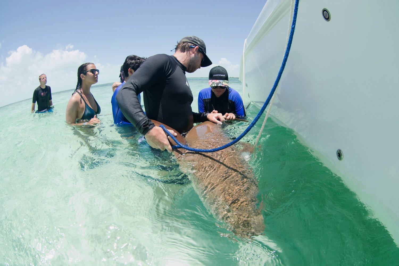 Silent Hunter - Annie Dr Tristan Guttridge -Sharks - Shark - Hammerhead - The Bahamas - Andros - Shark Research - Shark Science - Shark Diving - Eco - Eco Tourism.jpg