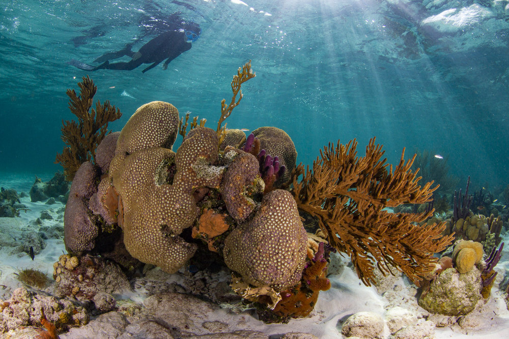 Silent Hunter - Annie Dr Tristan Guttridge -Sharks - Shark - Hammerhead - The Bahamas - Andros - Shark Diving - Eco - Eco Tourism - Coral Reef.jpg