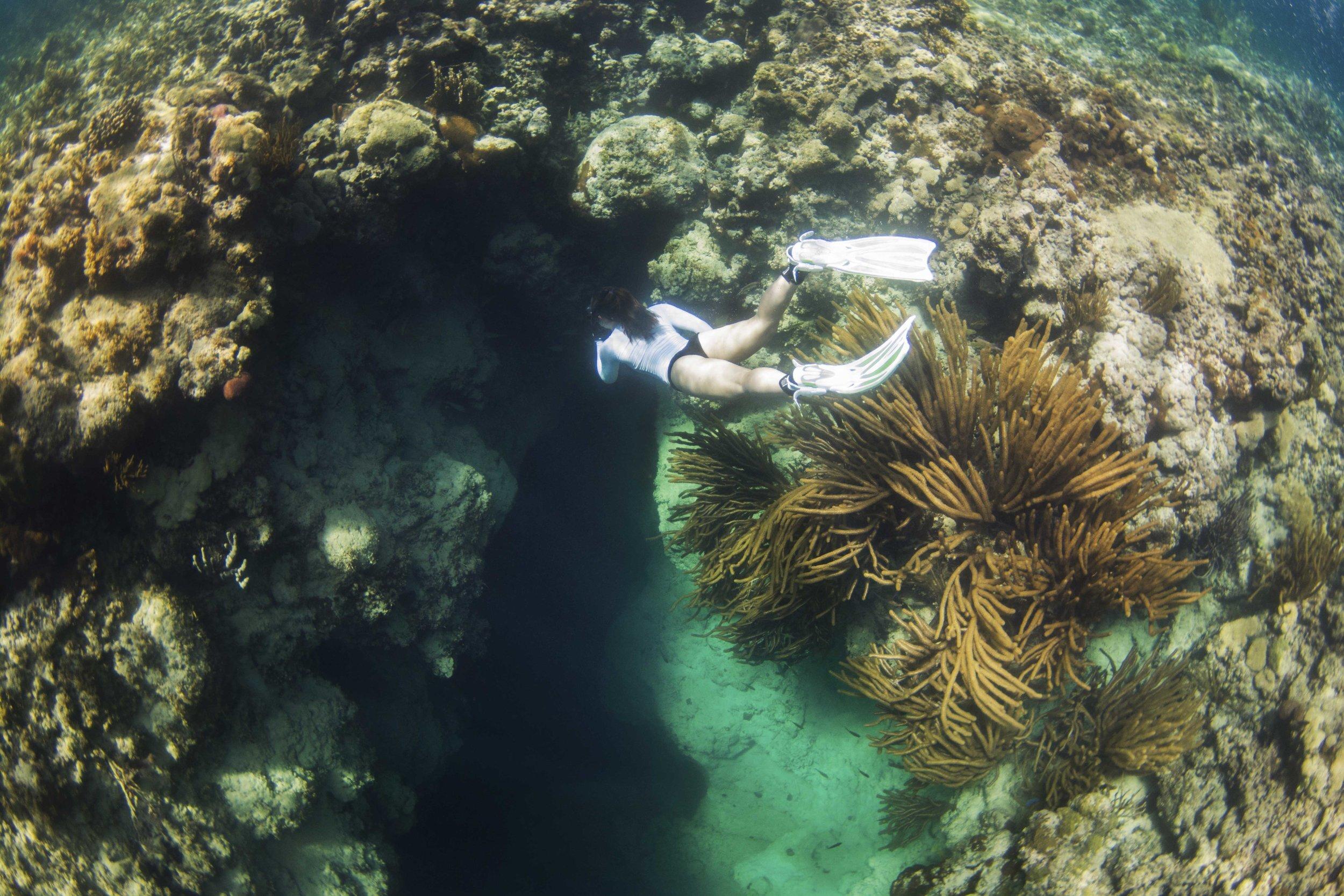 Silent Hunter - Annie Dr Tristan Guttridge -Sharks - Shark - Hammerhead - The Bahamas - Andros - Shark Diving - Eco - Eco Tourism - Blue Hole - Diving.jpg