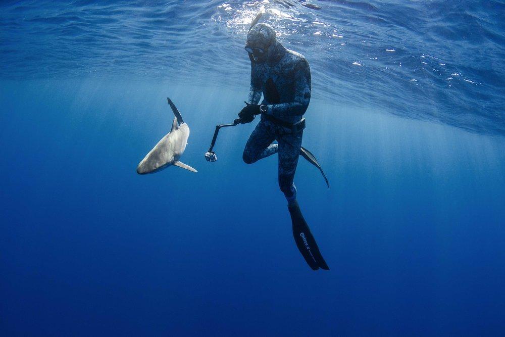 Silent Hunter - Annie Dr Tristan Guttridge -Sharks - Shark - Hammerhead - The Bahamas - Andros - Shark Diving - Eco - Eco Tourism- Shark Diver.jpg
