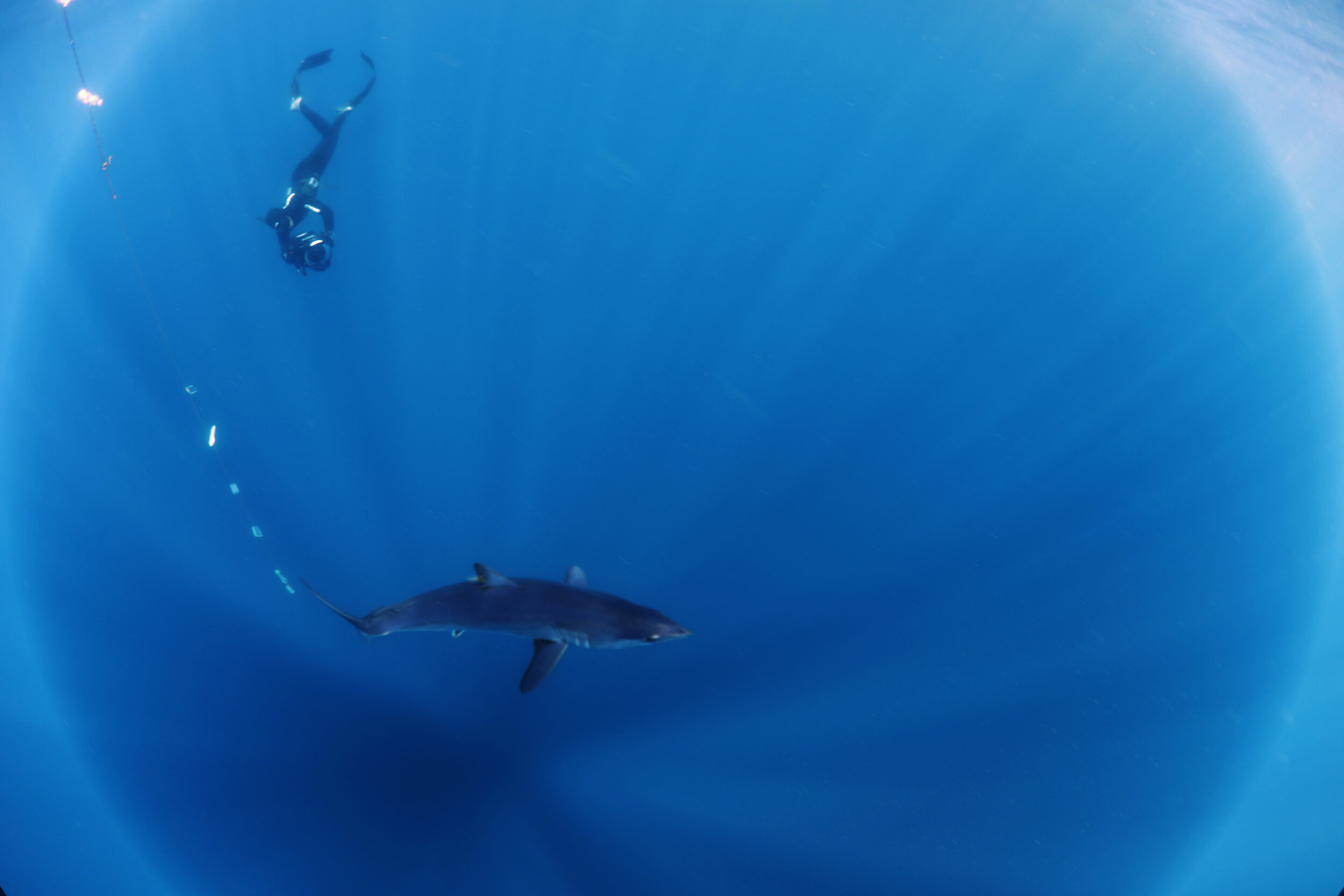 Mako Shark - The Silent Hunter - Discovery Channel - Shark Week -  Shark - Sharks - Mexico - Cabo - Shark Diving - Dr Tristan Guttridge - Annie Guttridge Freediving.jpg