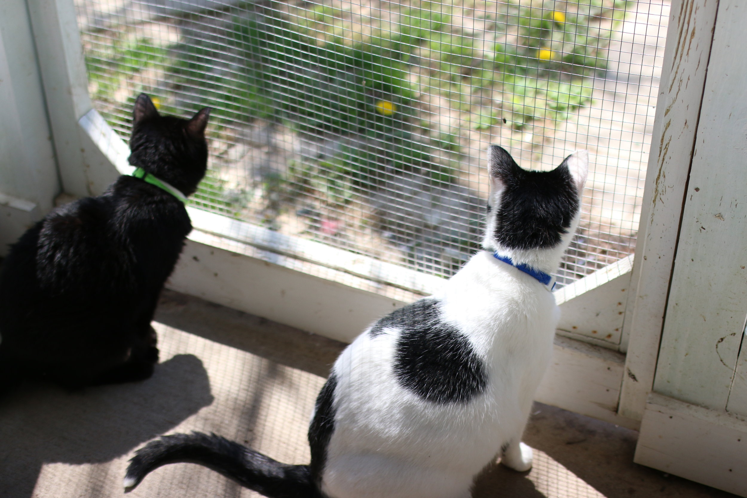 About Us - We are a private animal shelter located in rural Crystal Lake, Illinois. We abide by a no-kill policy, and have many cats and dogs looking for forever homes. Please feel free to browse our website, and be sure to contact us to schedule a visit or for more information.Learn More