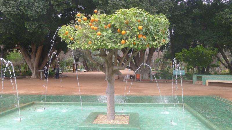 oranges+web.jpg
