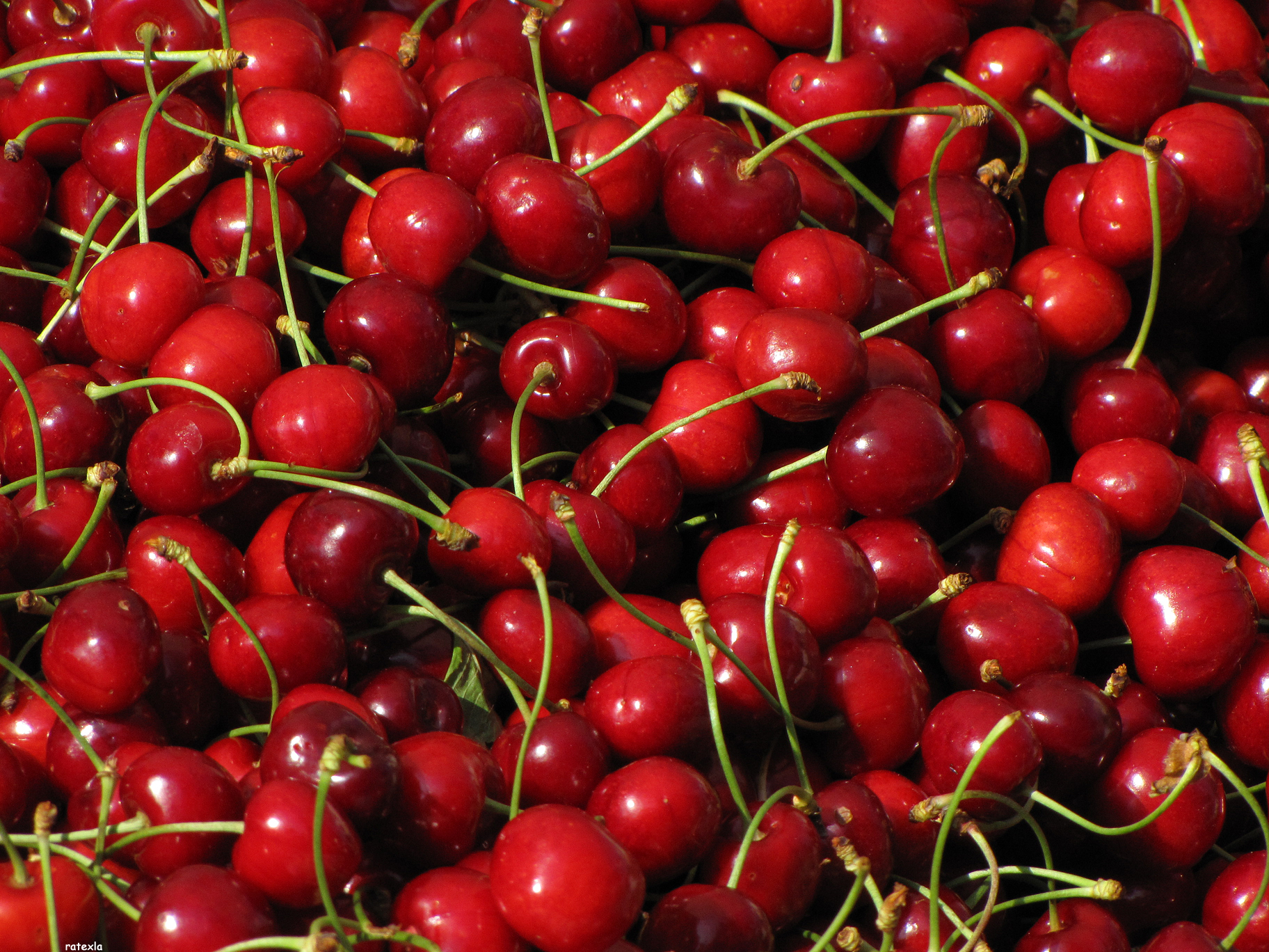 A beautiful pile of cherries, whom we should thank for the delicious drink that is cherry soda, from Wiki Commons