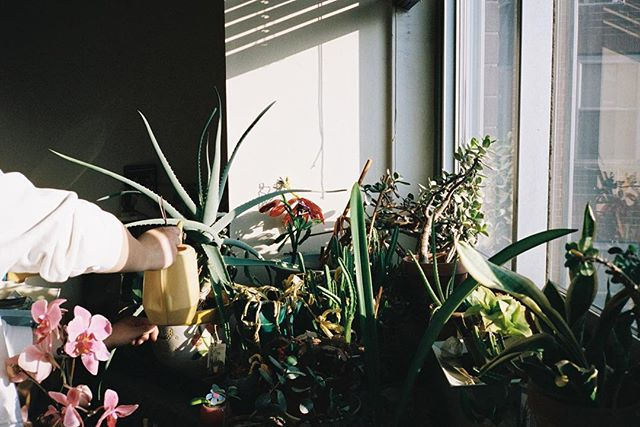 A familiar scene whenever I'm visiting my grandmother. The plants that inhabit this windowsill bask in the southern exposure  of her living room. Aloe, snake plants, and a few cacti she's had for over 40 years now would thrive, whether or not I was there to water them — they tend to be happier when left alone. But, I like too much the ritual of it all. 📸: @stephanie_tam
