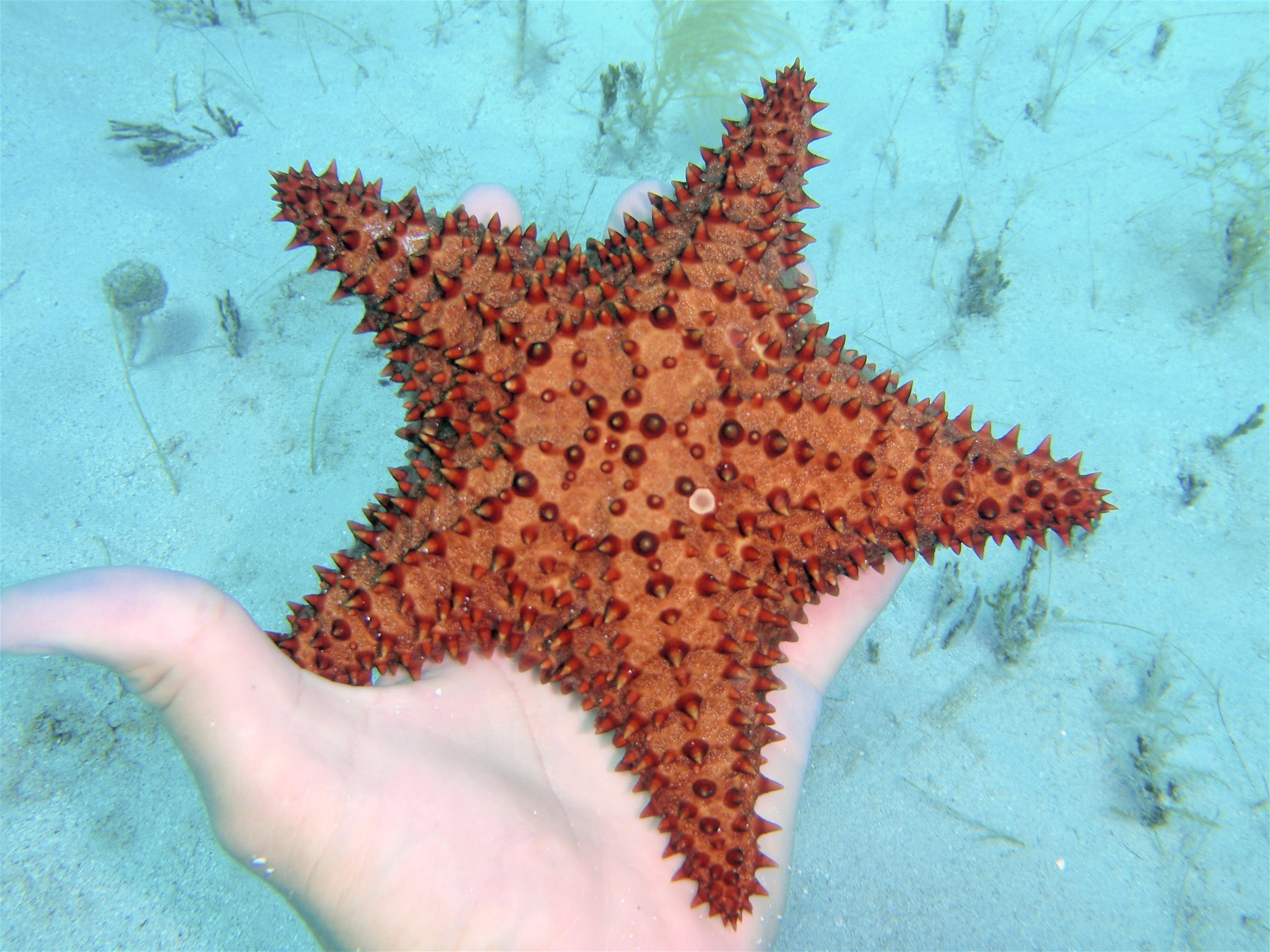 Starfish 064.jpg