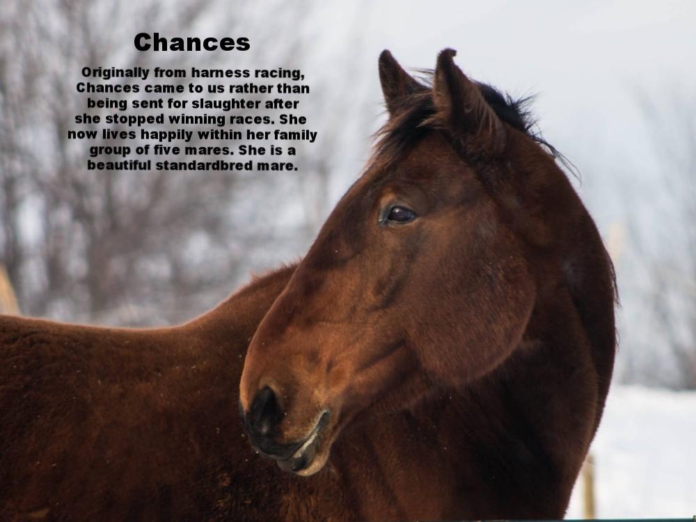 Chances2.jpg