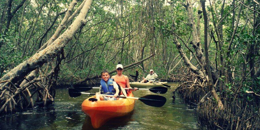 Mangrove-Kayak-Tour-Sarasota-Florida.jpg
