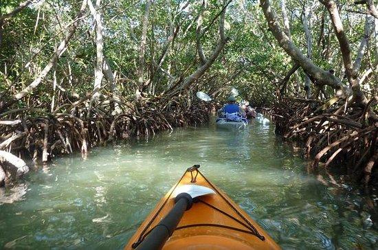 mangrove-tunnel-kayak.jpg