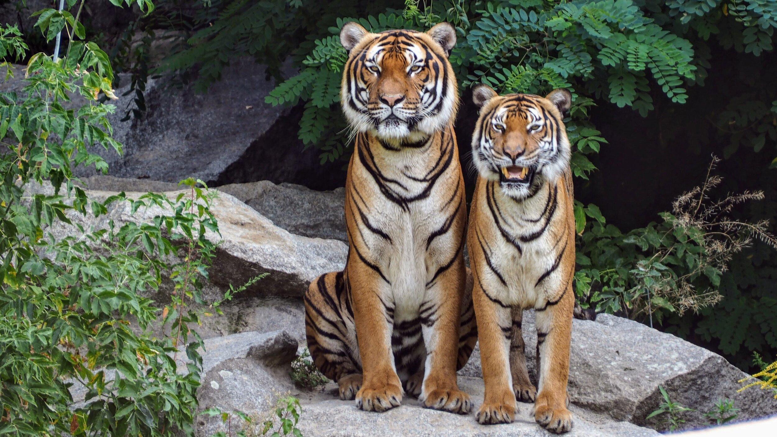 animal-park-animal-photography-animals-814898.jpg