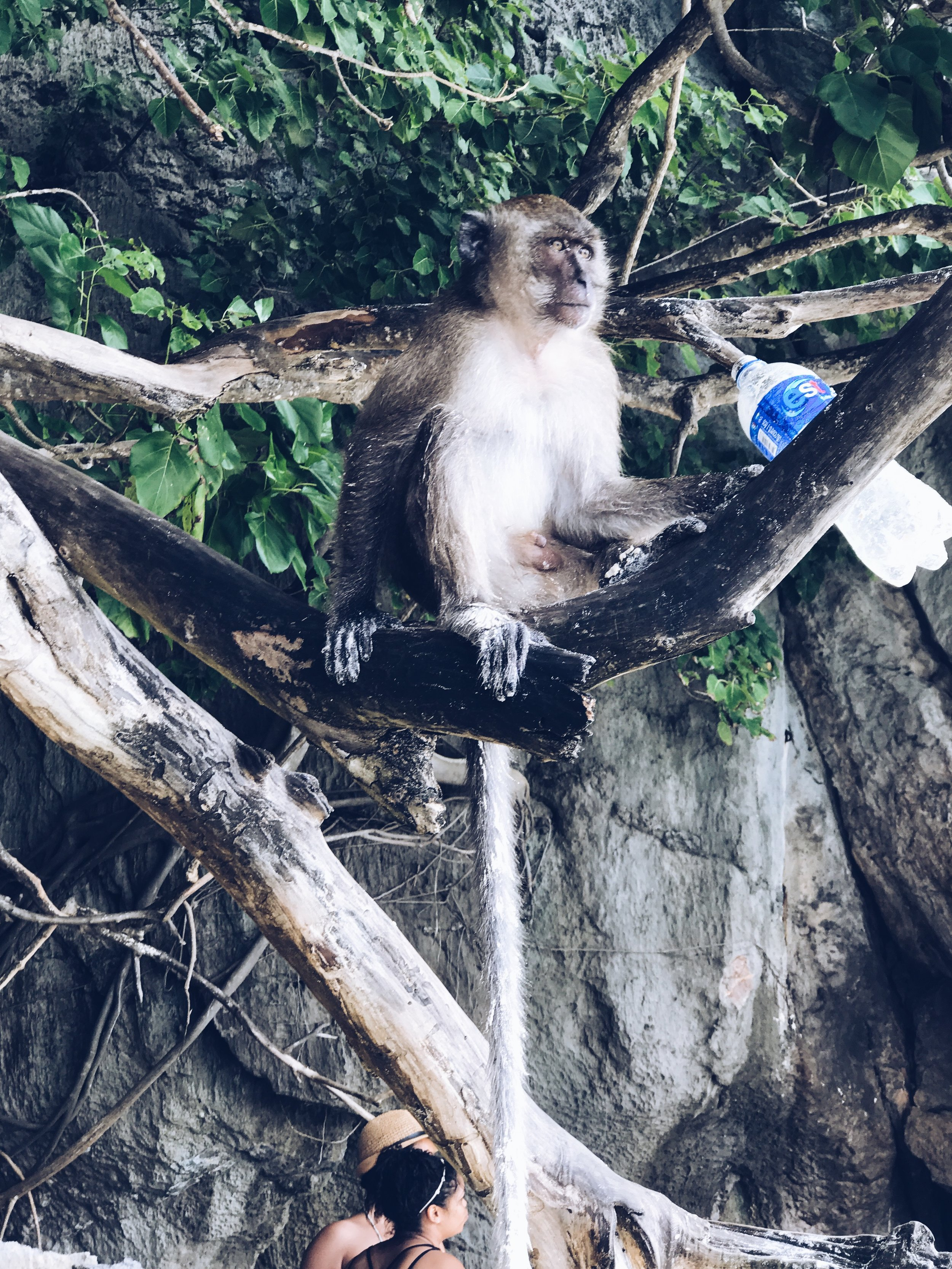 That monkey stole that bottle of Pepsi.... - He drank it like it was a Hennessy on the rocks....