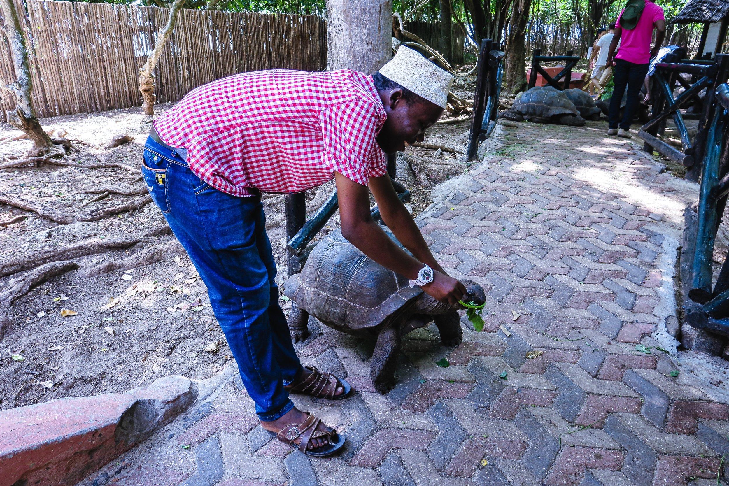 Khalifa Feeding a turtle on Prison Island