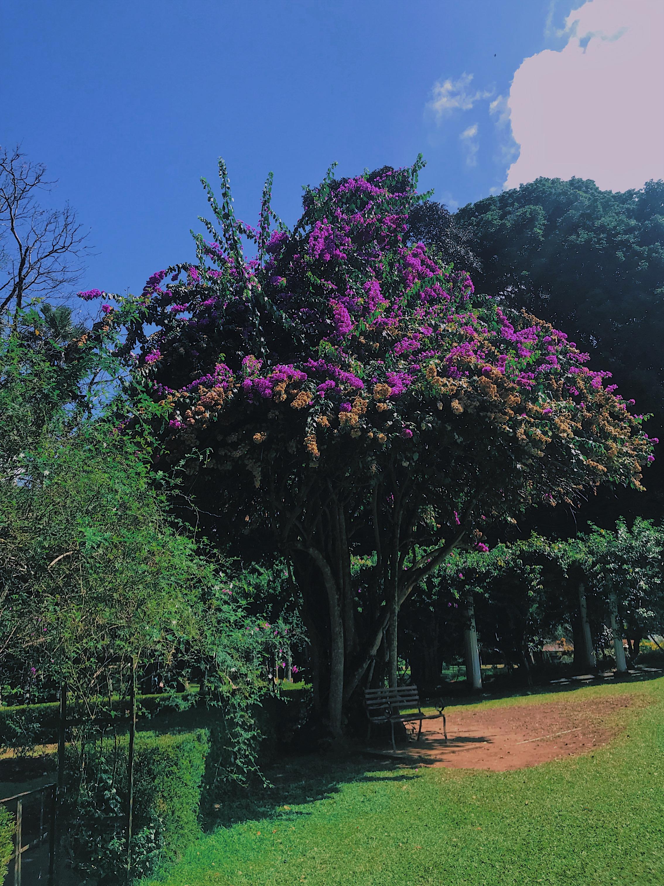 JPEG image-4A9544C38767-16.jpeg