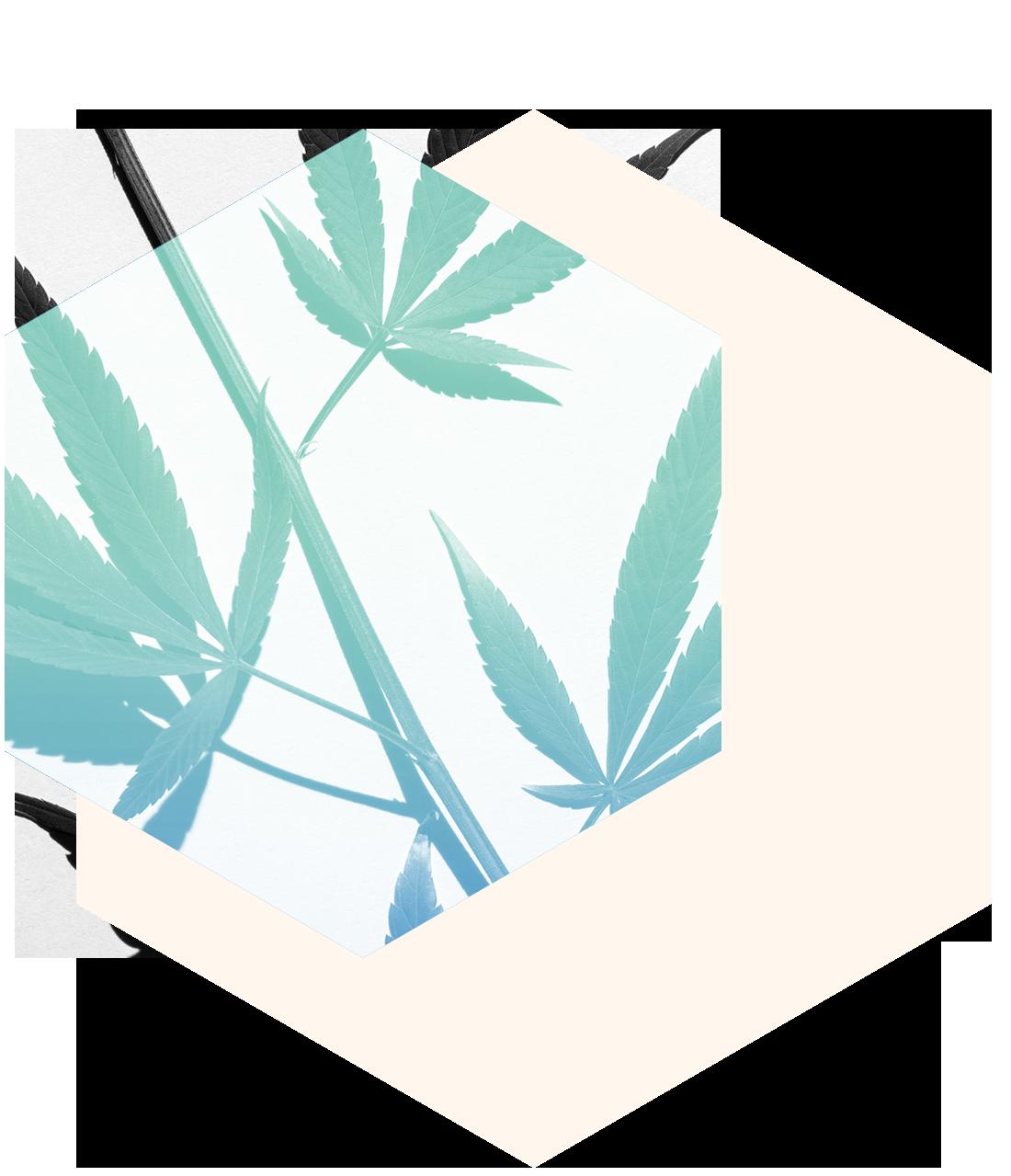 Mission - Präzision ist unsere oberste Prämisse.Trichoma sorgt für Transparenz im Geschäft mit Cannabis. Wir vereinen hochsensible Messverfahren mit grosser Erfahrung in der Laboranalyse und bieten deshalb Messresultate mit marktführender Exaktheit. Dank den präzisen Messungen von Trichoma können sich Endkonsumenten auf die Reinheit und Natürlichkeit von Hanfprodukten verlassen.