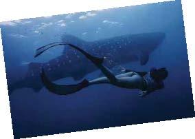 Freediving with whale sharks in the sea near Oslob, Cebu in the Philippines, Kia Sebastian ('19) helps protect marine animals as a sea warden.