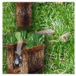 L'aération du sol de la pelouse.png