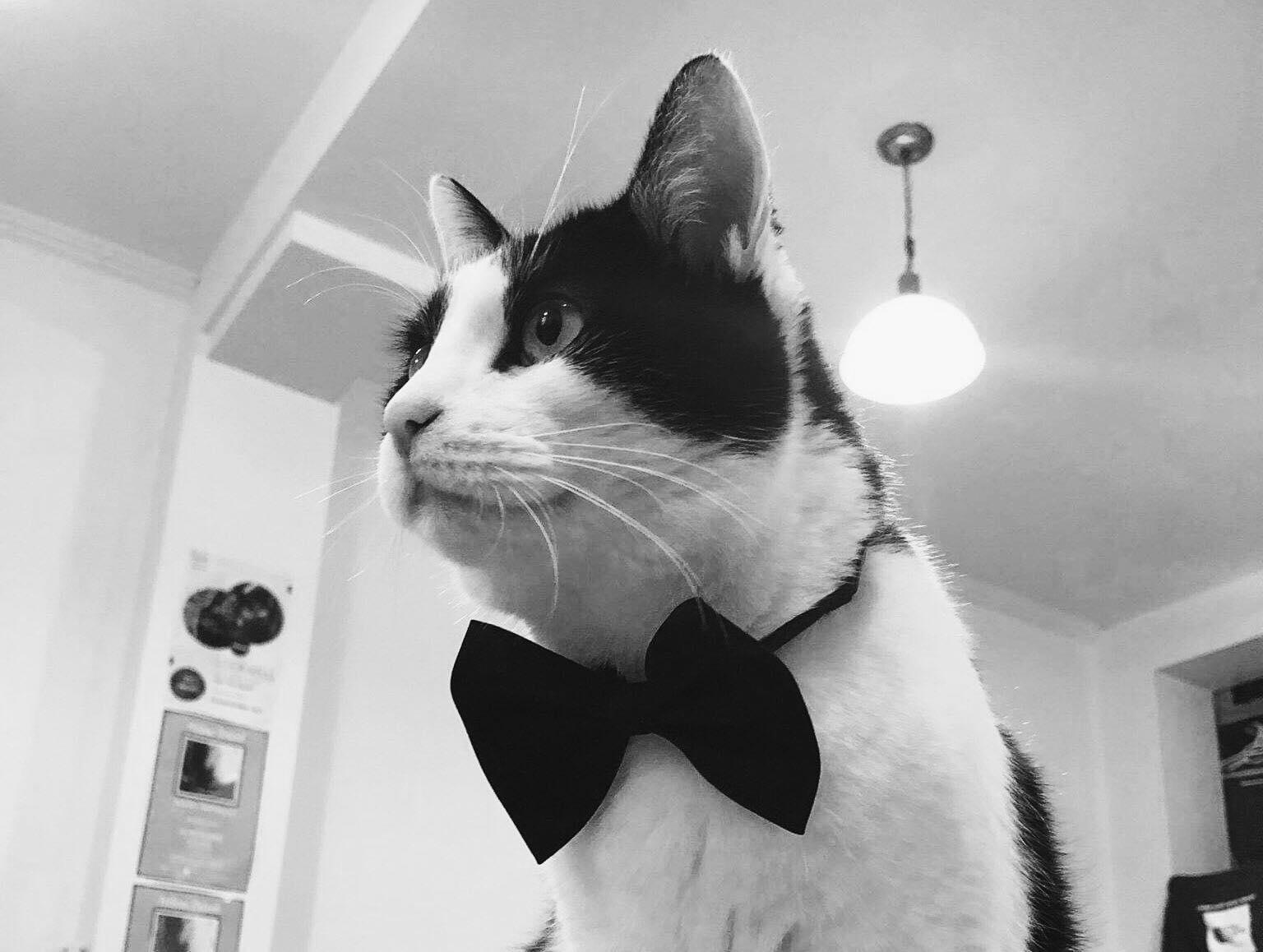 Tsao le chat - Rencontre avec Tsao, promo boy officiel de unïdsounds et colocataire majoritaire de l'humain Louis-Philippe. Membre notoire de l'équipe, on le reconnait par son tuxedo permanent, son regard saisissant ainsi que sa démarche de chasseur - gentlemen.