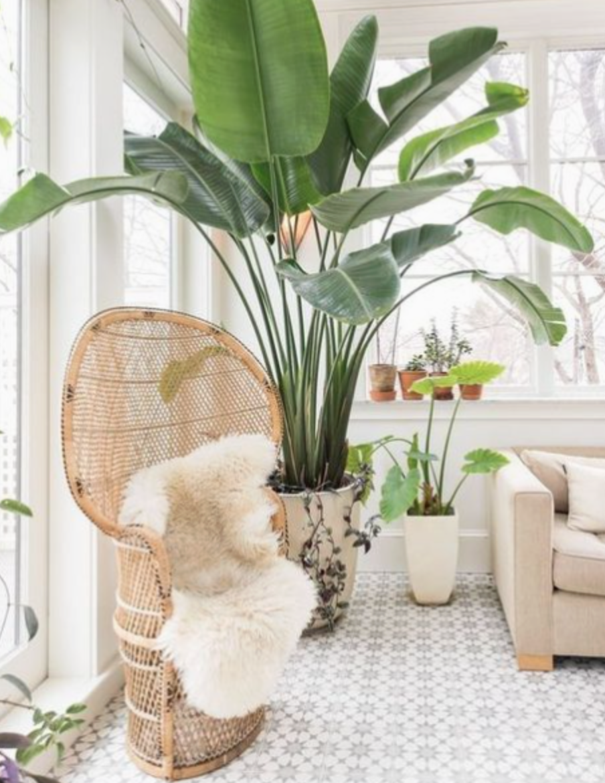 easy indoor plants