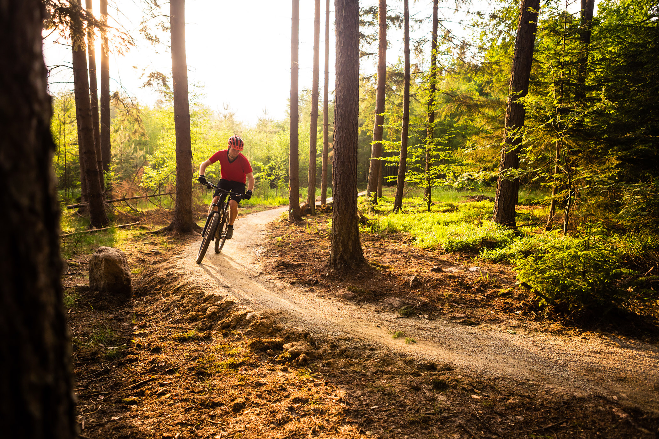 A mountain biker rides in a sunny forest on a dirt trail.