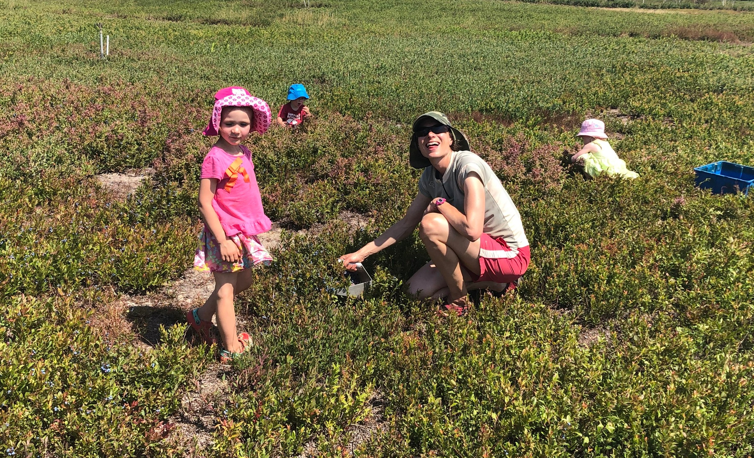 We all enjoyed picking blueberries but our one year especially loved sitting in the blueberry patch will handfuls of berries within reach.