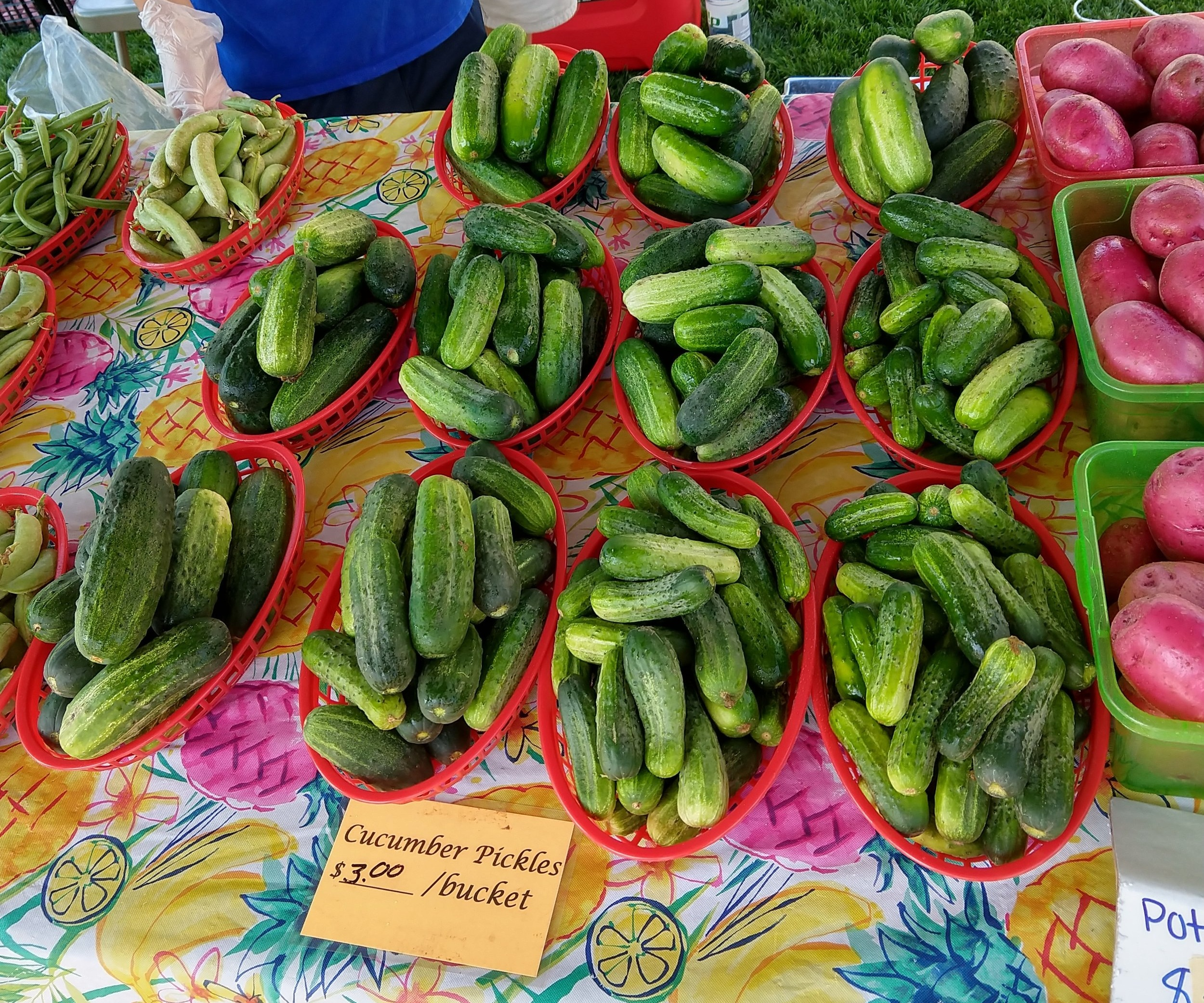 The first step for good pickles is to get them fresh. Our local farmer's markets have quality produce at bargain prices.