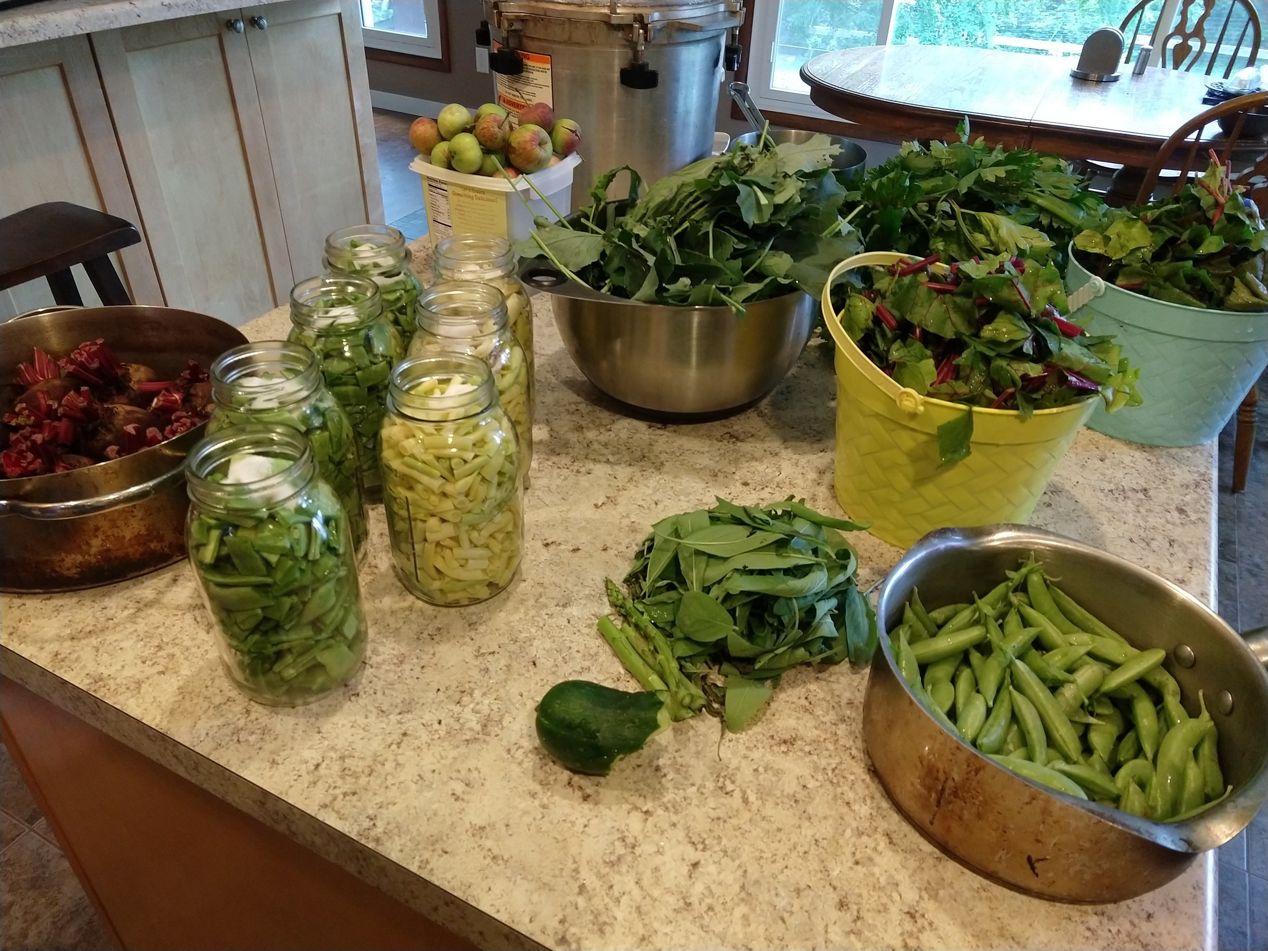 Here's the morning's fresh pickings, ready for cooking, canning, and freezing!
