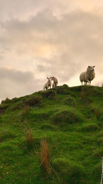 Scotland26.jpg