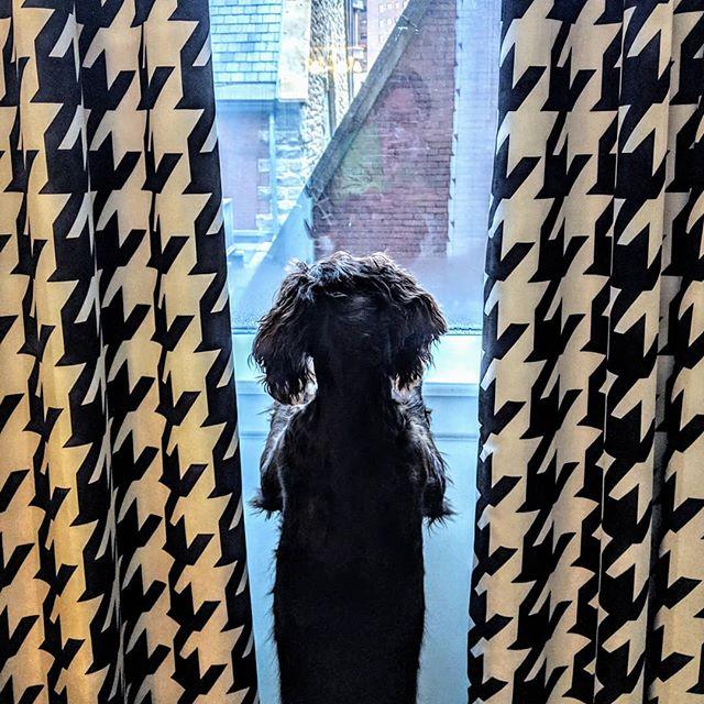 Just hanging out at The Kimpton enjoying the view. . . . . . . . #birddogcoffee #birdseason #birddogsofinsta #boykinspaniels #boykins #smallbusiness #localcoffee #dogs🐶 #dogs #dogsofinstagram#pittsburghsteelers #pittsburgh