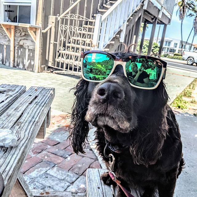 Adventure s withy girl 🥰 . . . . . . .  #oxnard #hcseafood #seafoodheaven #waterdogs #sun