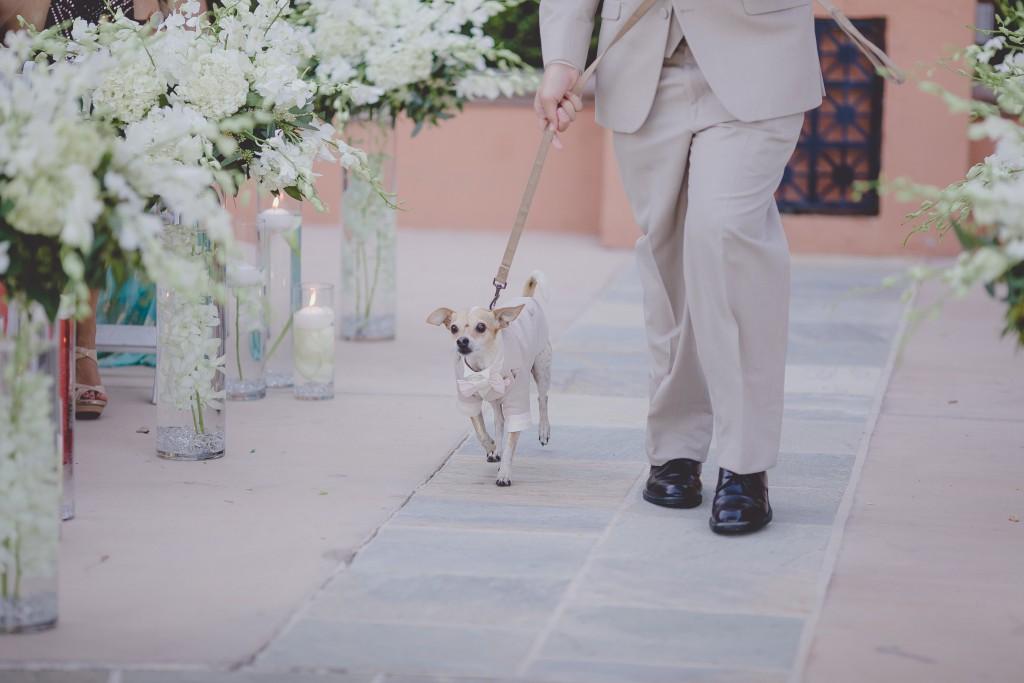 dog-wedding-ceremony