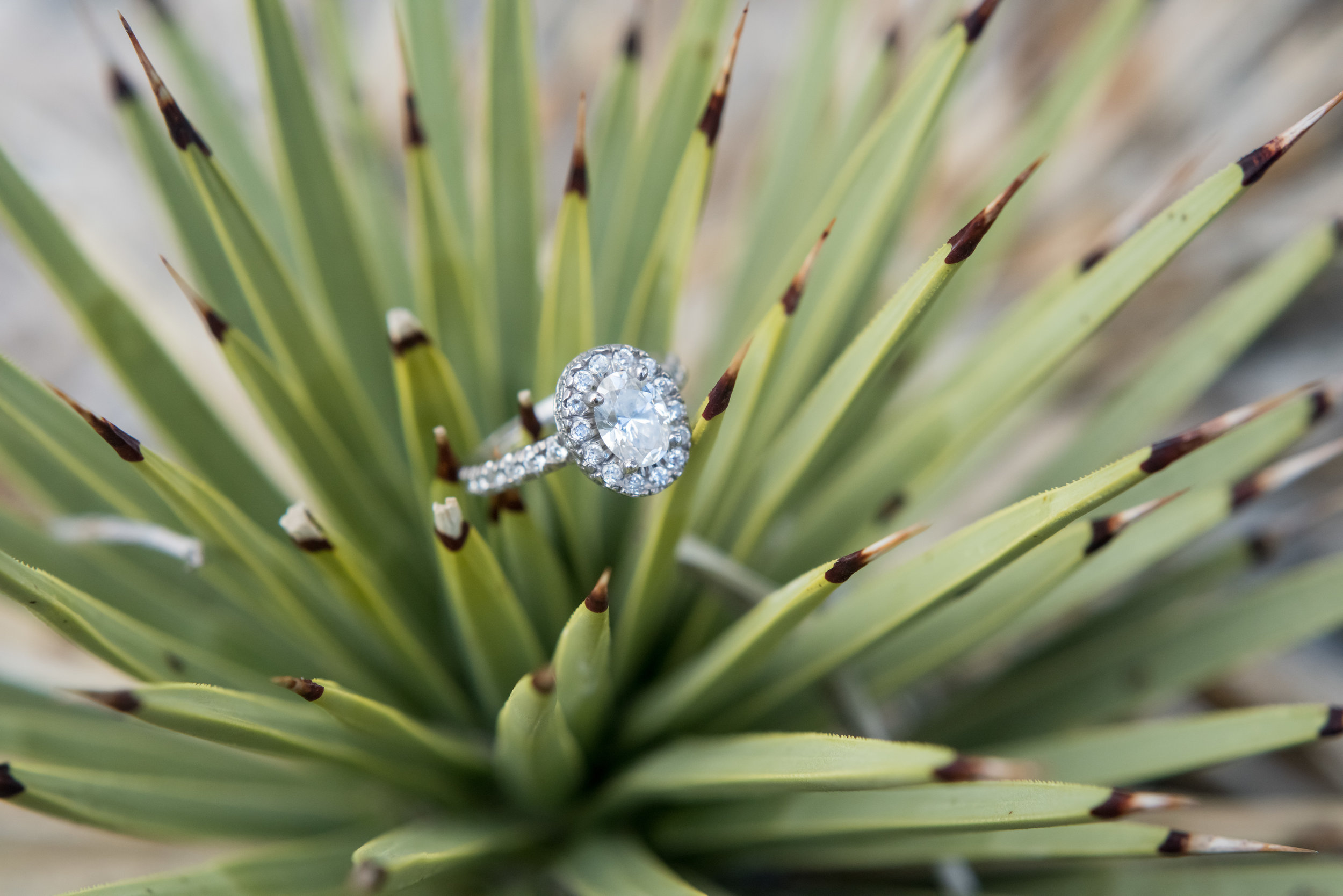KMH-Photography-las-vegas-wedding-planner-green-orchid-events-engagement-ring.jpg