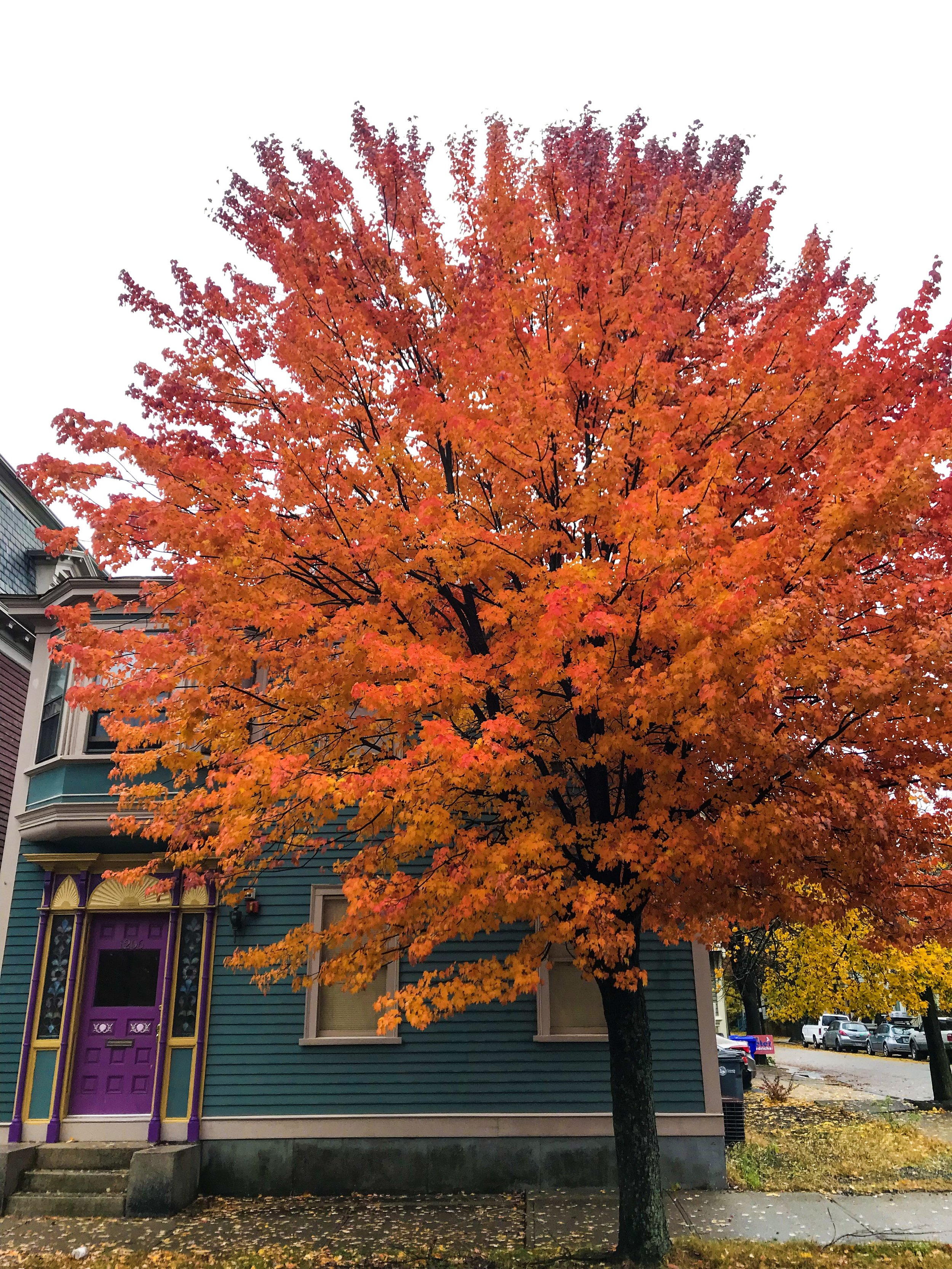 Fall colours to die for. And this house?!