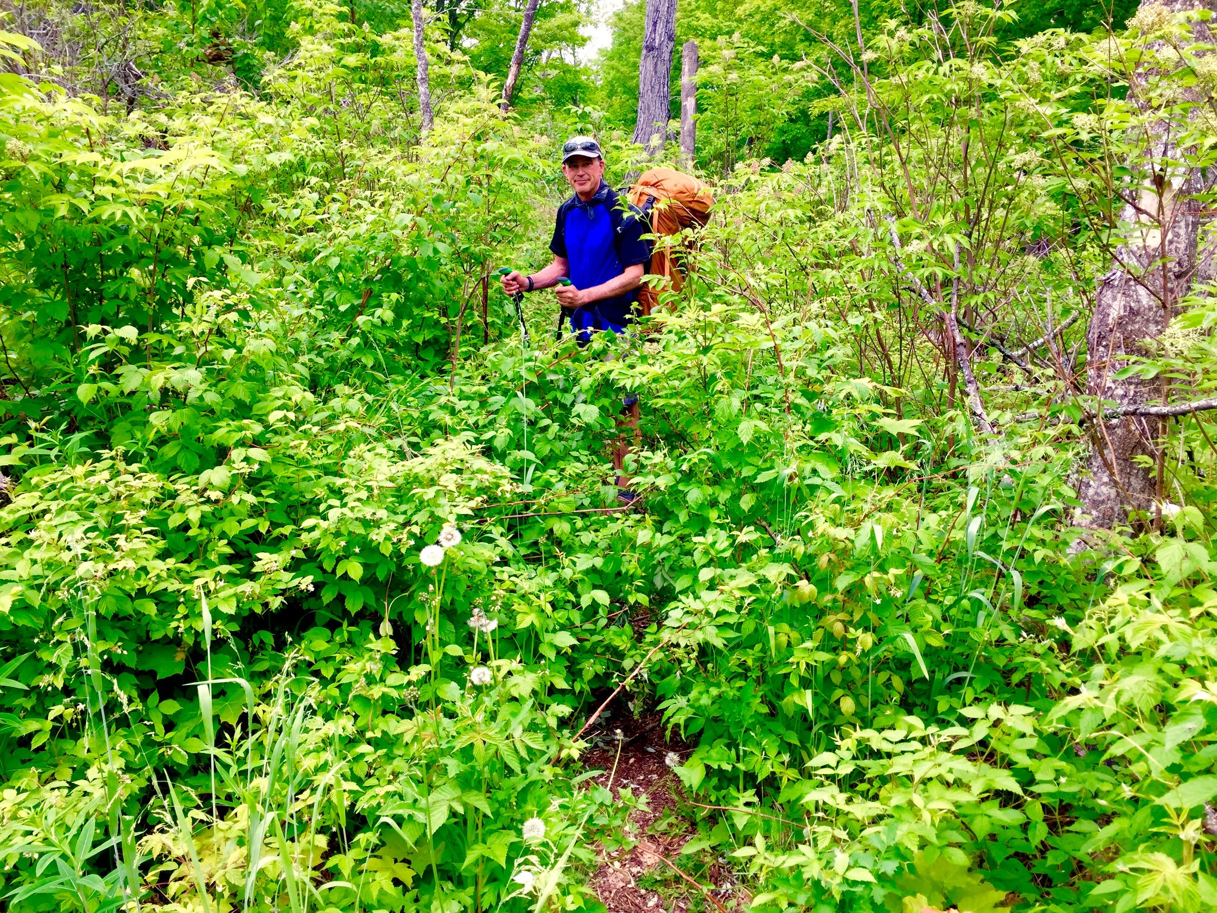 8 - Overgrown Trail.jpg