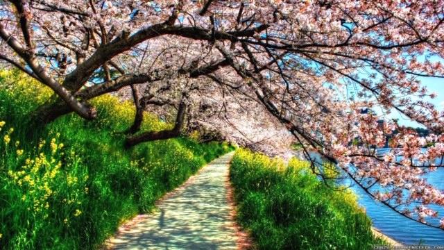 a spring pic.jpg