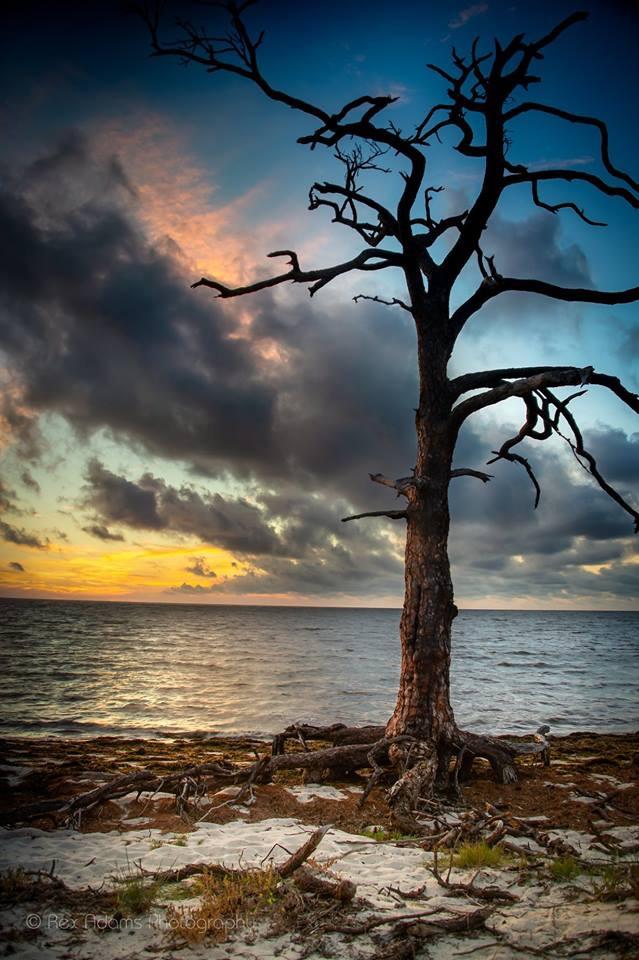 a holy tree.jpg