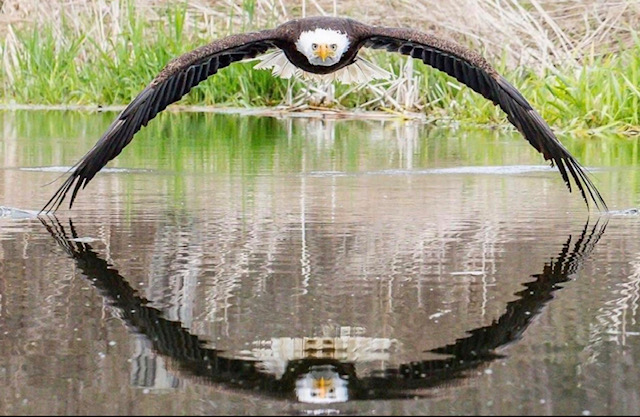 an eagle image.jpg