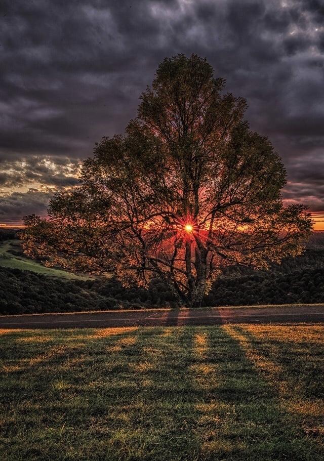 a rejoice tree.jpg