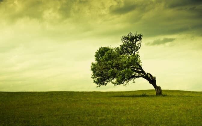 stand tree.jpg