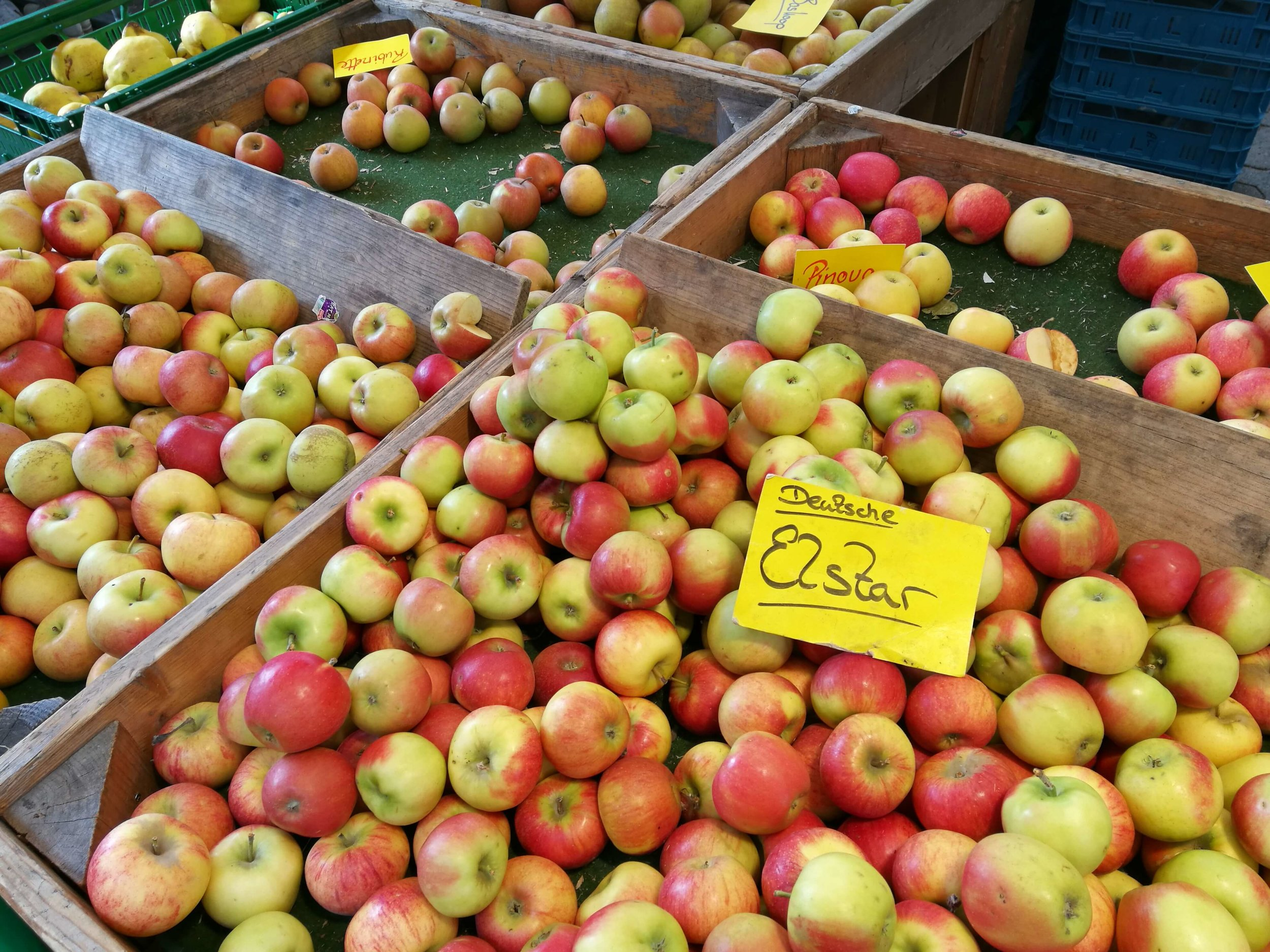 German Elstar apples at our local market