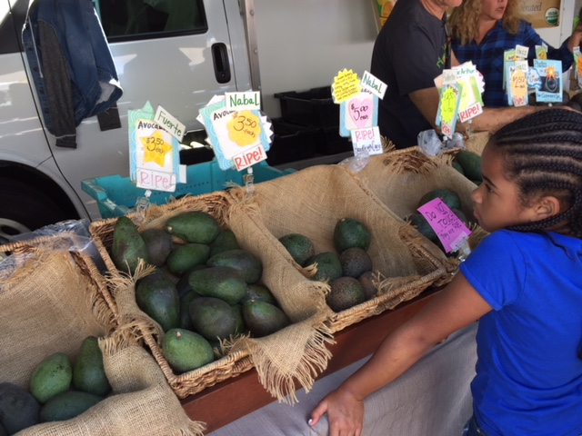 So many different kinds of avocados!