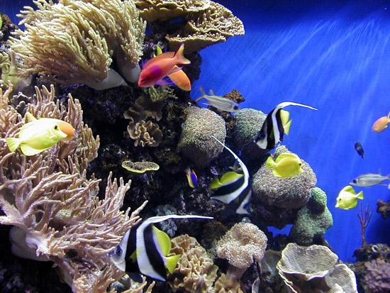 monterey-aquarium.jpg