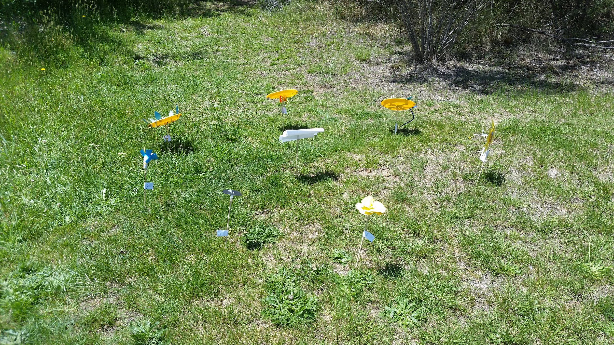 Field Day experiment set up.jpg