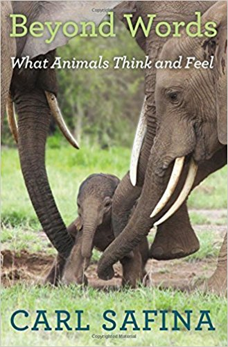 Beyond Words   Weaving decades of field observations with exciting new discoveries about the brain, Carl Safina's landmark book offers an intimate view of animal behavior to challenge the fixed boundary between humans and nonhuman animals.