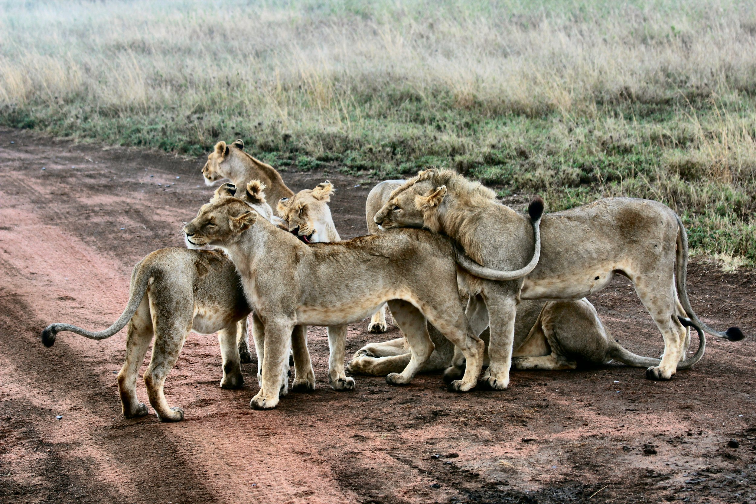 When you study animal packs, there is rarely a conflict, as the members of the pack solve their problems and move on.