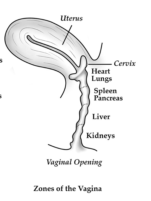 vaginal canal.png