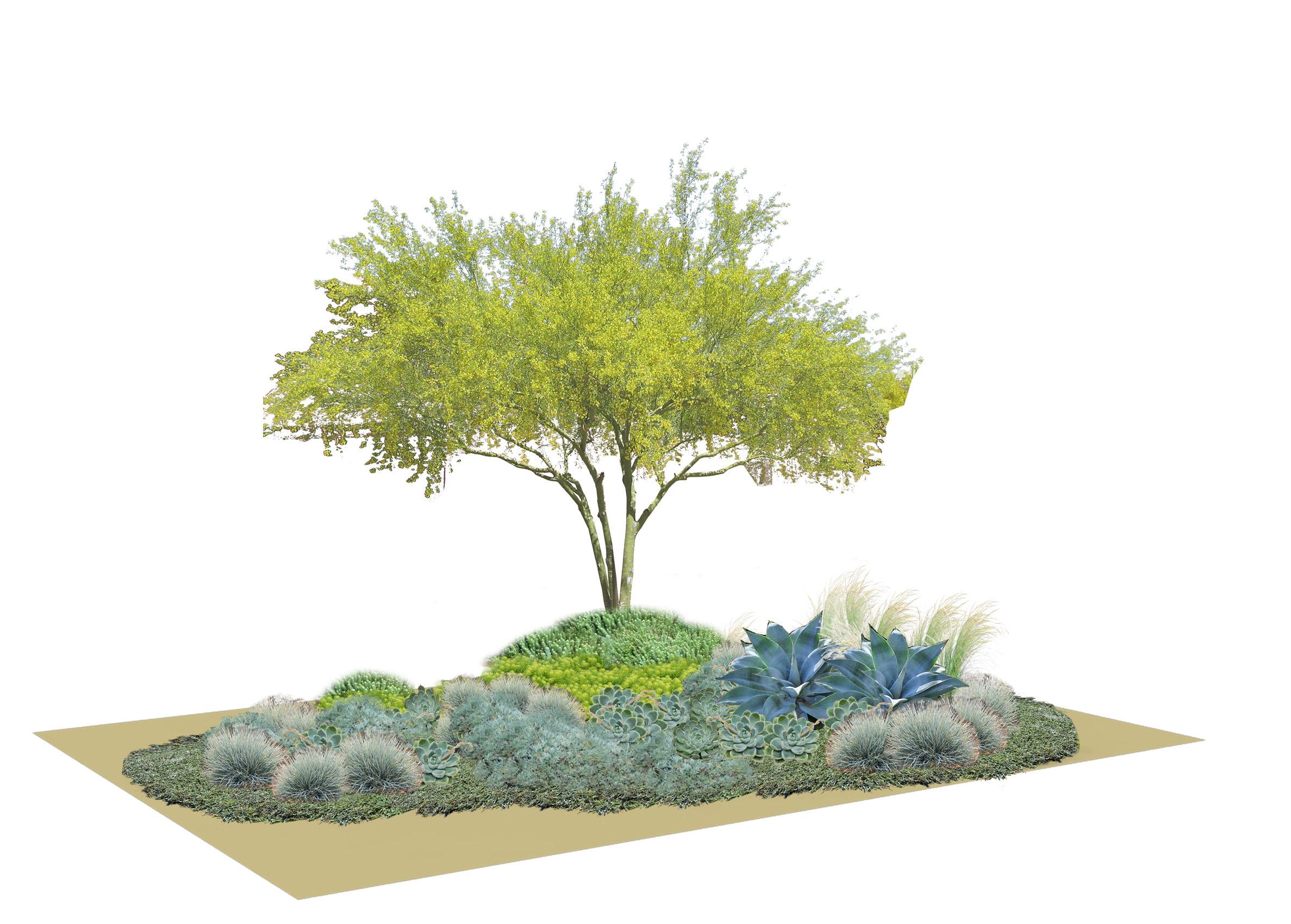 Dry 1.3 Planting Scheme .jpg