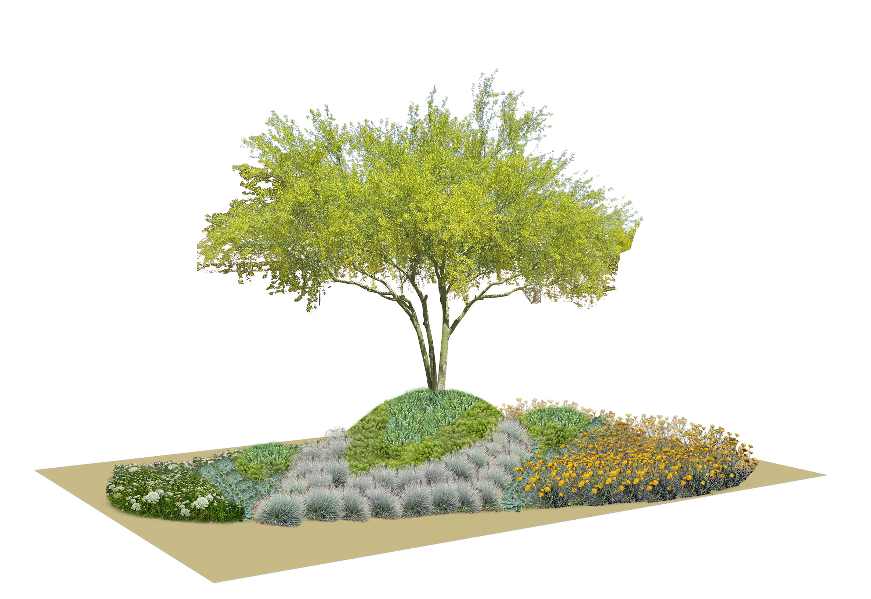Dry 2 Planting Scheme.jpg