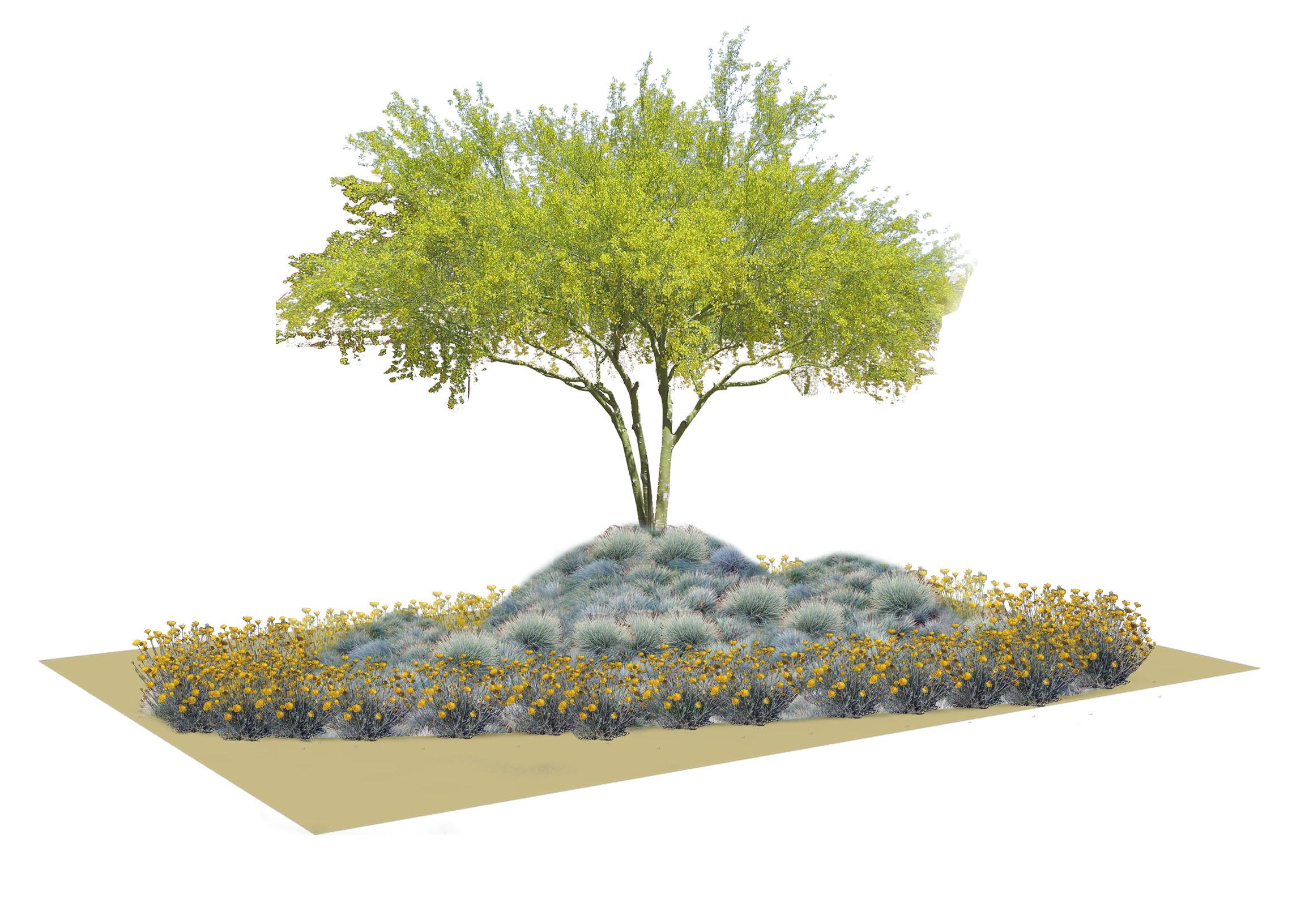 Dry 3 Planting Scheme.jpg