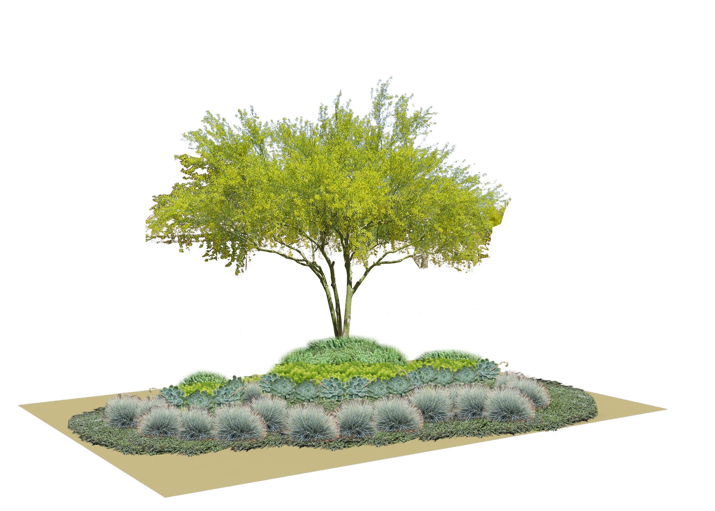Dry 1 Planting Scheme.jpg